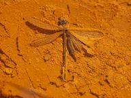 Fällt ein Tier in eines der Thermalbecken, wird es zum Fossil und mit Mineralien überkrustet