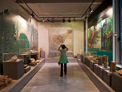 Hauptraum des Museums des versteinerten Waldes mit fossilen Hölzern aus der ganzen Welt. Schön wird die Entwicklung der Pflanzen über die Erdgeschichte erklärt.
