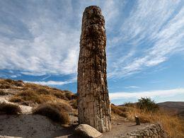 Einer der fossilen Baumstämme
