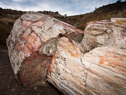 Ein riesiger Baumstamm, der nun aus Opal und Quarz besteht