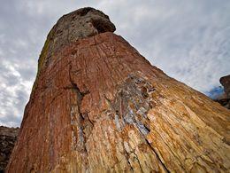 Einer der größten Baumstämme im UNESCO-Geopark.