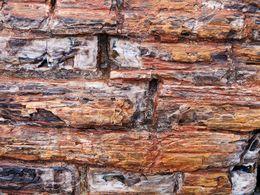 Perfekt erhaltene Holzstruktur eines fossilen Baum
