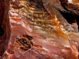 Das organische Holz wurde in Opal umgewandelt