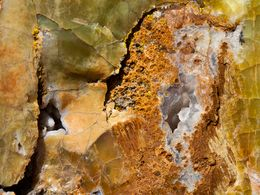 In Opal umgewandeltes Holz