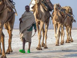 They walk kilometres in hot and dry conditions. (c) Tobias Schorr