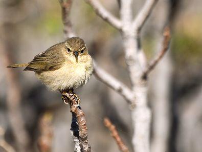 Für die Vogelbeobachtung kann sich ein Fernglas lohnen!