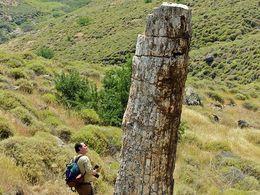 Tobias Schorr neben einem fossilen Baumstamm im UNESCO-Geopark auf Lesbos