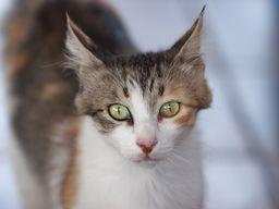 Eine neugierige Katze bei Dimitris Taverne in Akrotiri. (c) Tobias Schorr