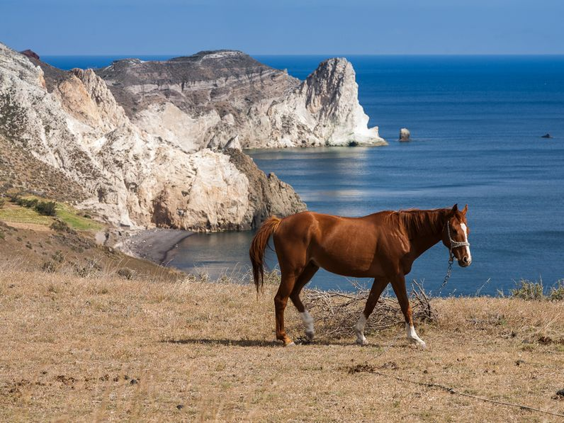 Pferd vor der Kulisse der weißen Tuff-Felsen von Mesa Pigadia. (c) Tobias Schorr