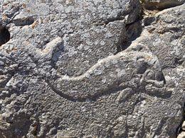 Das Delphin-Relief im Artemidoros-Heilgtum von Alt-Thera