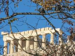 Die Säulen der Akropolis. (c) Tobias Schorr
