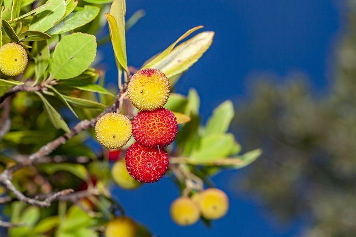 Diese leckeren Früchte werden im Herbst reif. Wer wandert, freut sich über eine leckere Erfrischung! (c) Tobias Schorr