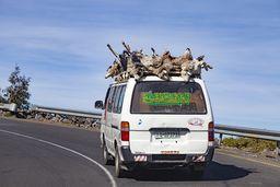"""Ein sehr tierquälerischer Transport, um Schafe zum Schlachten zu bringen. :-( Leider ist Tierschutz aber auch bei uns im """"zivilisierten"""" Europa nicht an der Tagesordnung (Massentierhaltung!). (c) Tobias Schorr"""