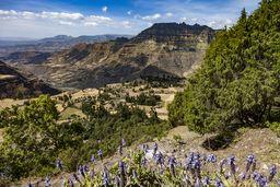 Lavendel vor äthiopischer Landschaft. (c) Tobias Schorr