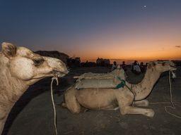 Die Kamele werden unser Gepäck transportieren und so den Aufstieg erträglich machen.