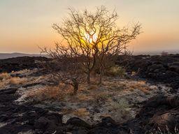 Kleine Inseln der Vegetation in einer unwirklichen Lavawüste
