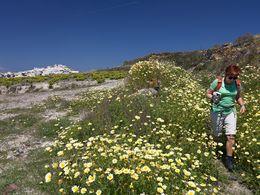 Traumhafte Wanderung durch Blumenwiesen. (c) Tobias Schorr, April 2017
