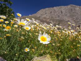 Im Frühling lohnt es sich, über die Wiesen zu streifen und nach seltenen Blüten zu suchen. Fotomotive gibt es genug! (c) Tobias Schorr, April 2017
