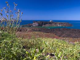 Lupinen reichern den Boden der Vulkaninsel mit Stickstoff an und bieten anderen Pflanzen die Chance zur Ansiedlung. Blick auf Palea Kameni (c) Tobias Schorr, April 2017