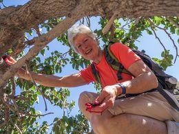Manchmal lohnt es sich in den Baum zu klettern... (c) Tobias Schorr