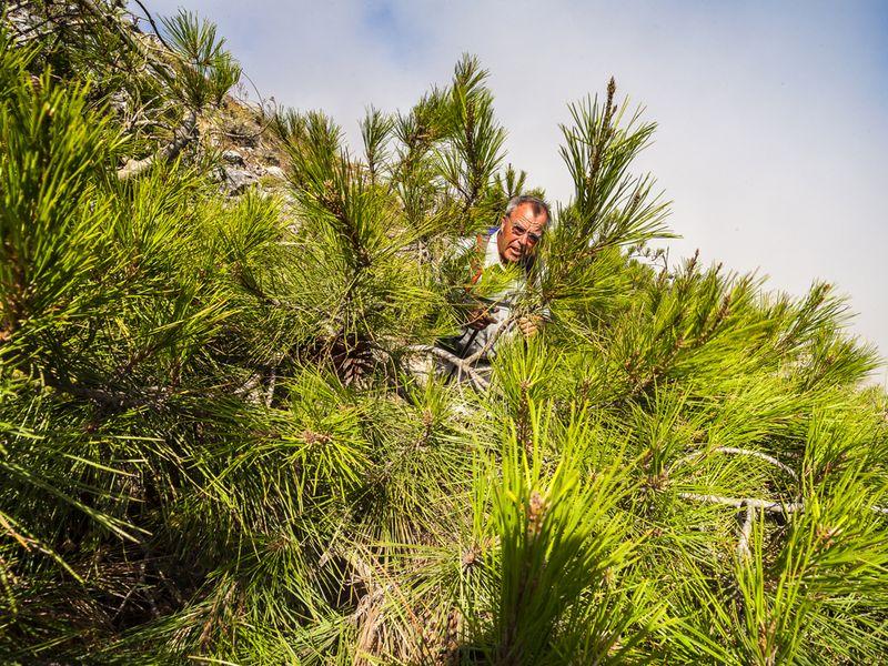 Am Profitis Ilias gibt es ein kleines Kiefernwäldchen, das den Wanderweg versteckt. (c) Tobias Schorr
