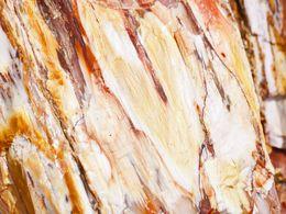 Durch Mineralien gefärbte, fossile Holzstrukturen