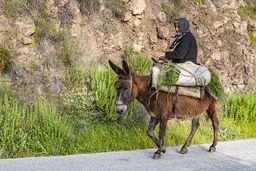 Eine Bäuerin aus Megalochori reitet nach Hause. (c) Tobias Schorr