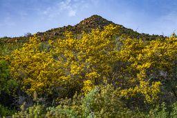 Blick auf den Gipfel Chelona und Ginster. (c) Tobias Schorr