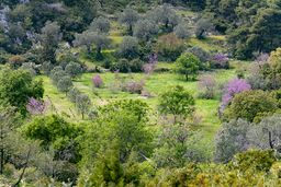 Ein wunderschönes Feld beim Dorf Kameni Chora. (c) Tobias Schorr