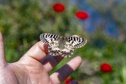 Schmetterling vor Frühlingsfarben. (c) Tobias Schorr