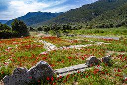 Leider werden im Frühling die schönen Blumenwiesen abgemäht. (c) Tobias Schorr