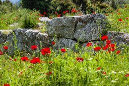 Mauern eines antiken Heiligtums in Troizen. (c) Tobias Schorr