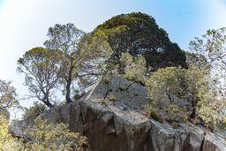 Auf den Felsen wachsen heute Kiefern, wo früher Lava glühte. (c) Tobias Schorr