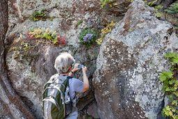 Beim Fotografieren einer endemischen Glockenblumenart, die es nur auf Methana geben soll. (c) Tobias Schorr