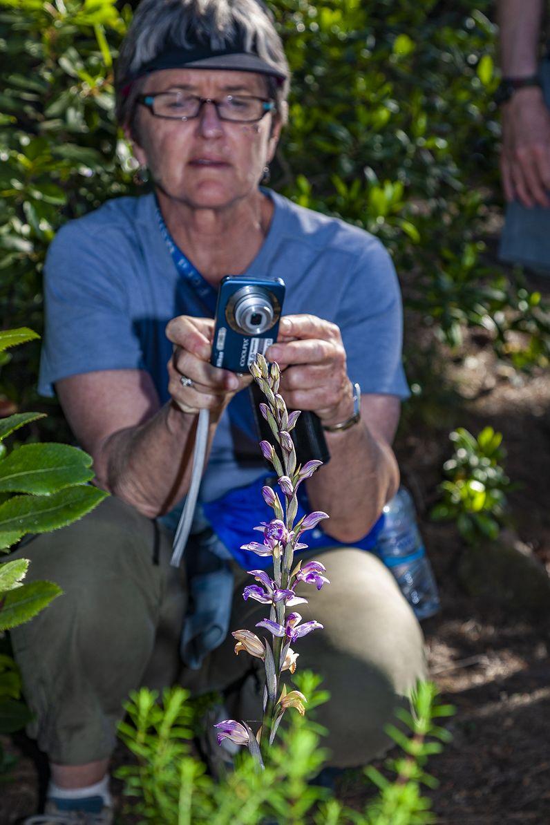 Beim Fotografieren des violetten Dingels (Orchidee). (c) Tobias Schorr