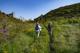 Die Frühlingswiese des Stavrolongoskraters ist voll mit seltenen Pflanzen. (c) Tobias Schorr