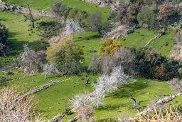 Feigen und Mandelbäume im Panagitsa-Tal. (c) Tobias Schorr