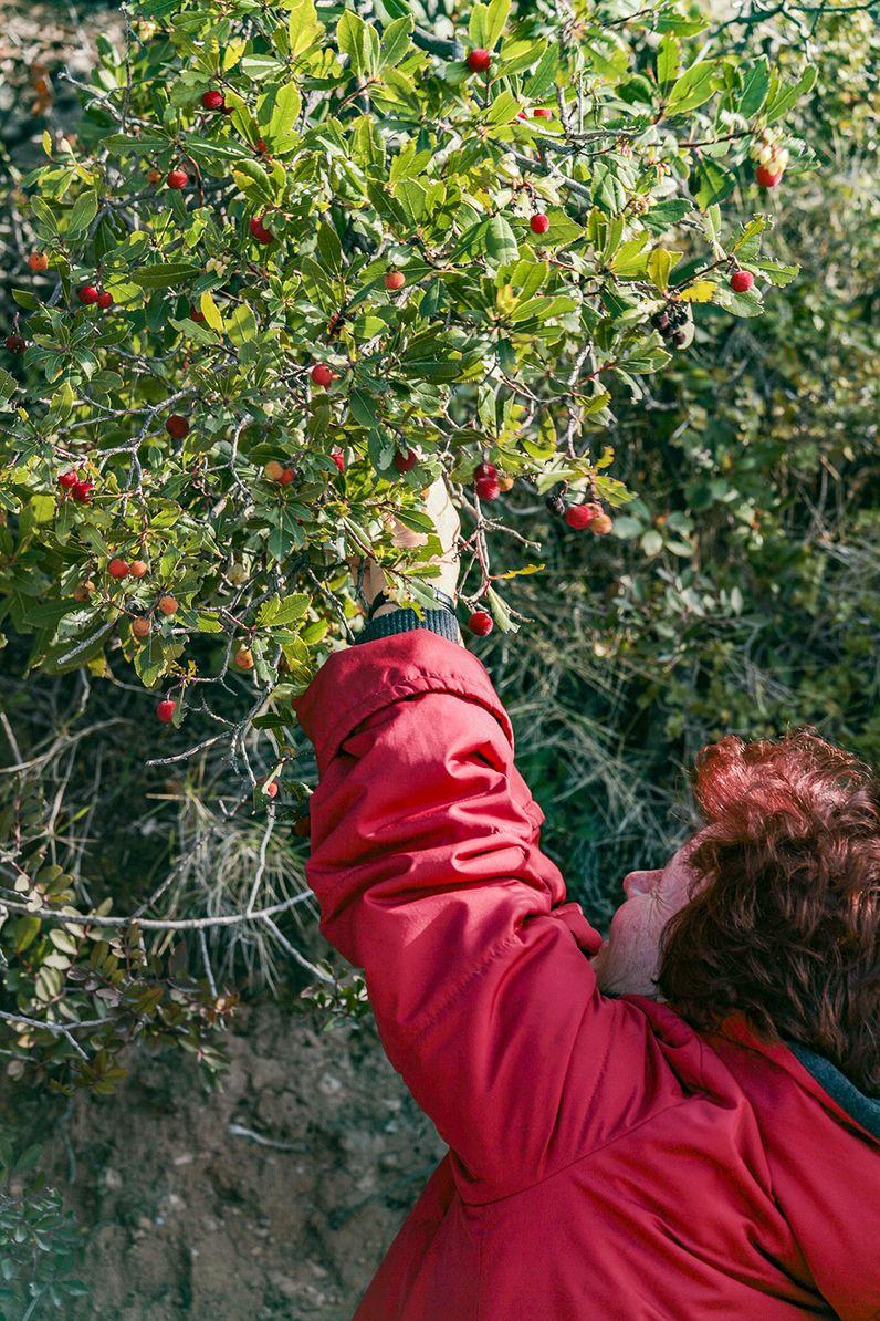 """Die eßbaren Früchte des Erdbeerbaumes (""""Koumaró""""). (c) Tobias Schorr"""