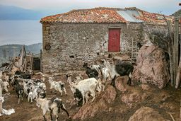 Bergziegen am Haus des Ziegenhirten Jiorgos Dimitriou †. (c) Tobias Schorr
