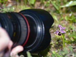 Orchidee von der Hochebene Lutesa