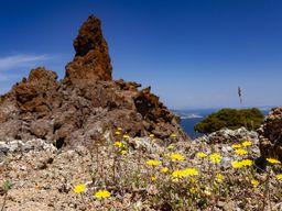 Lava und Blüten im historischen Vulkan von Methana