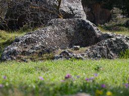 Becken einer antiken Weinpresse