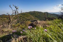 Blick vom Gipfel Profitis Ilias auf das Massiv des Chelona-Gipfels südlich davon. (c) Tobias Schorr