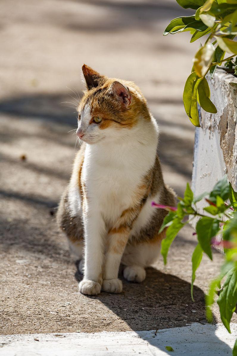 Katzen sind überall mit dabei. (c) Tobias Schorr