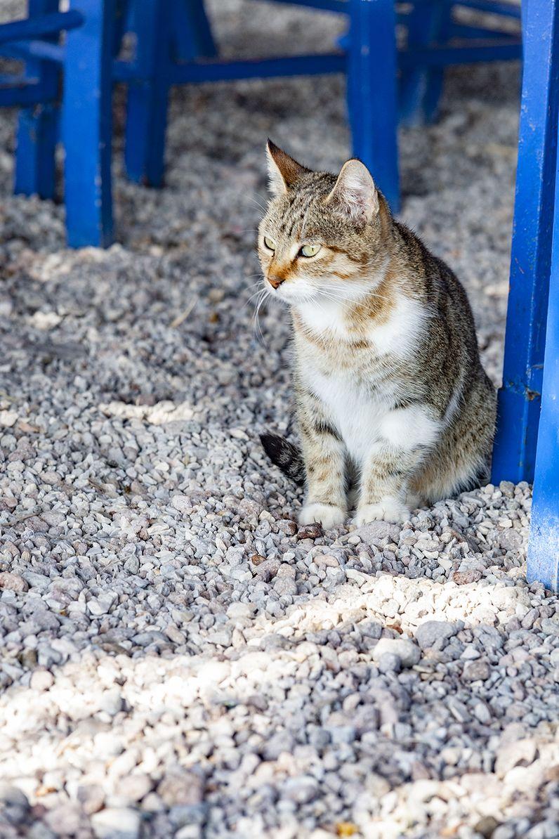 Eine Katze aus Vathy. (c) Tobias Schorr