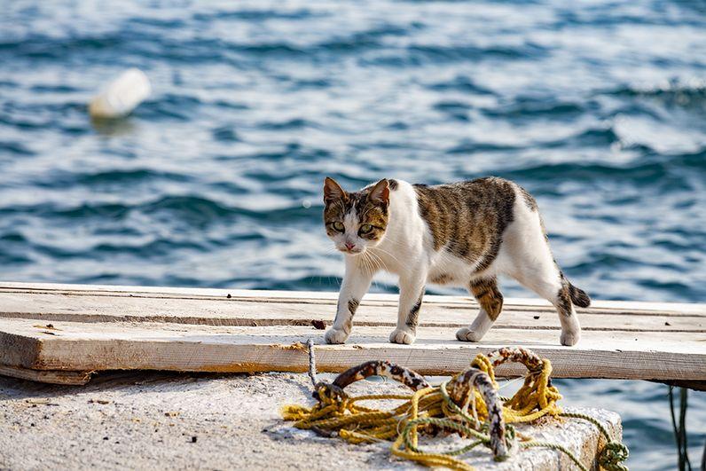 Katzen gibt es wie Sand am Meer... (c) Tobias Schorr