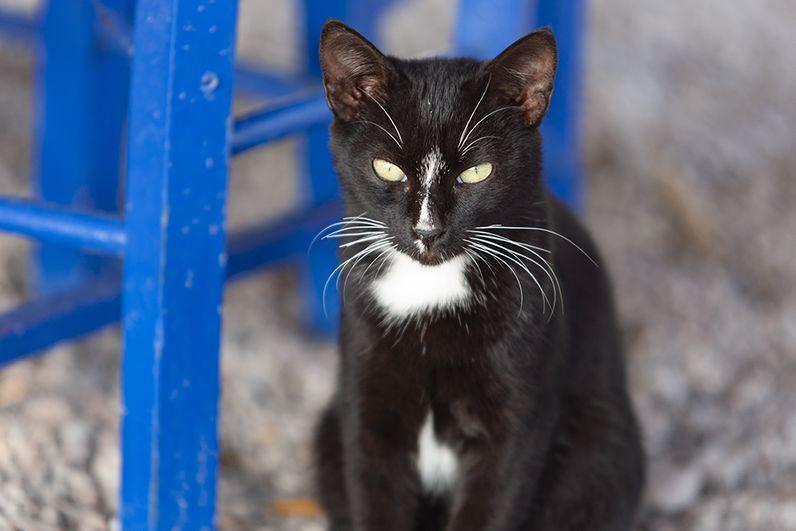 Schwarzweiße Katze aus Vathy wartet auf ihren Fisch. (c) Tobias Schorr