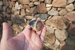 Antike Scherbe, gefunden auf einem Acker an der Akropolis Paliokastro. (c) Tobias Schorr
