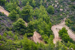 Ein neuer Fahrweg zu Weinfeldern. Leider werden immer mehr solche Wege durch die Wälder gebaggert. Eigentlich gehört die einzigartige Landschaft streng geschützt. (c) Tobias Schorr