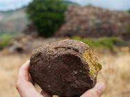 Kleiner Gecko, der auf der Akropolis von Methana lebt...